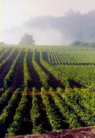 BurgundyRegion